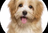 Záchod pre psov a jeho cena