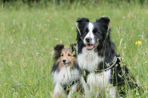 Zachod pre psov do exteriéru